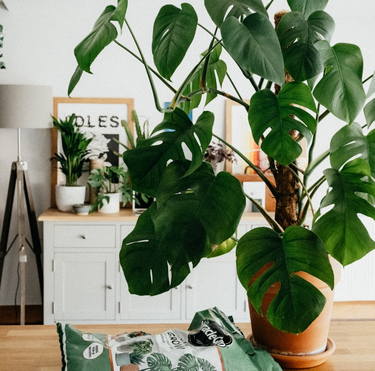 Keep Your Indoor Plants Alive With These Expert Tips